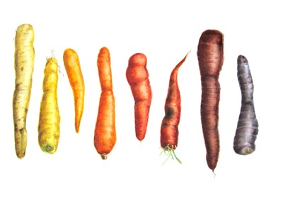 Lee-Angold_Heirloom_Carrots.jpg